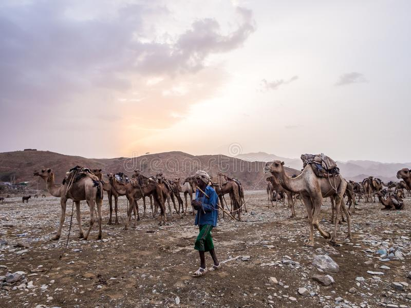 Mercado do camelo de longe a região em Etiópia do norte fotos de stock royalty free