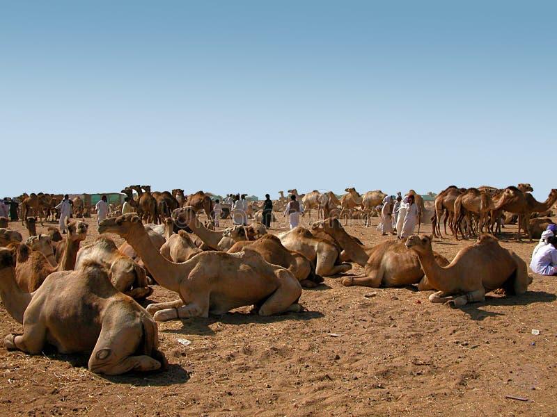 Mercado do camelo do deserto do sul Egito fotografia de stock