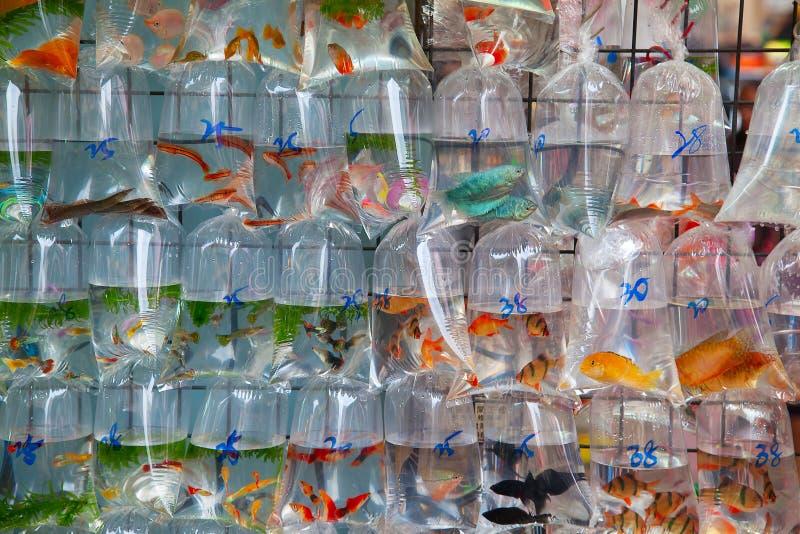 Mercado do Goldfish fotos de stock