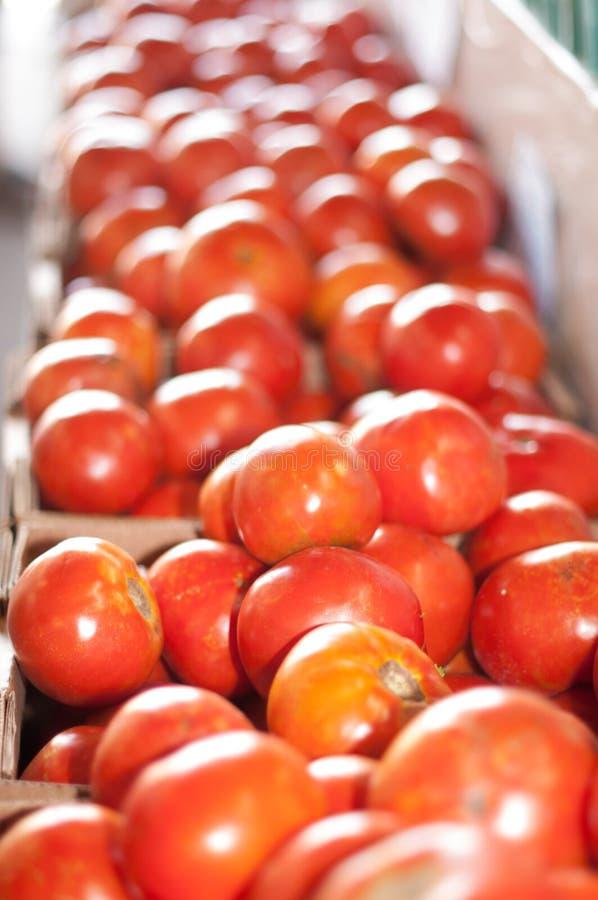 Mercado dos fazendeiros dos legumes frescos em Memphis foto de stock royalty free