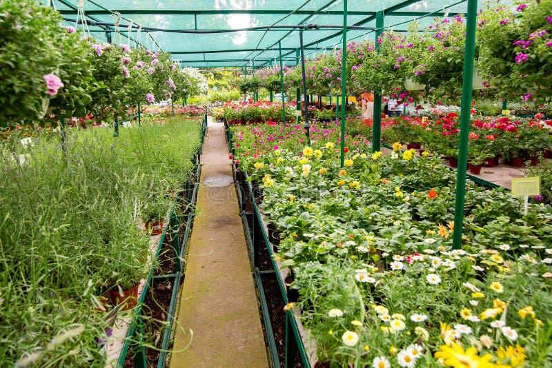 Mercado para vender macetas con las flores de la ejecución imagen de archivo libre de regalías