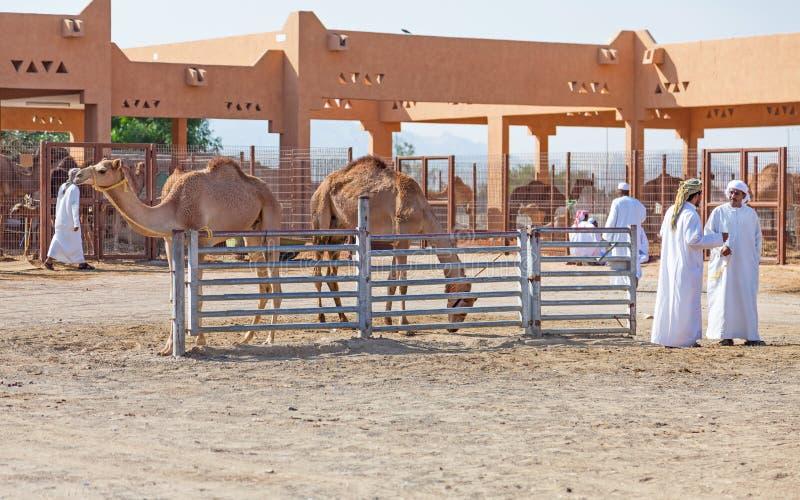 Mercado tradicional del camello en Al Ain en los UAE fotografía de archivo libre de regalías