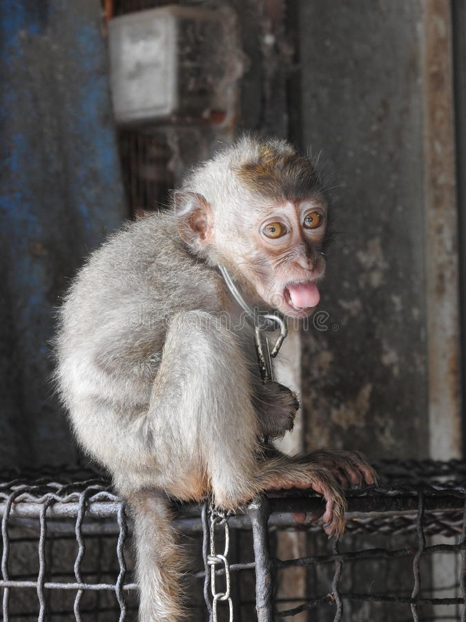 Mercato animale in Bali Indonesia immagini stock