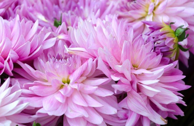 Mercato augusto del fiore del centro città di Redmond fotografia stock