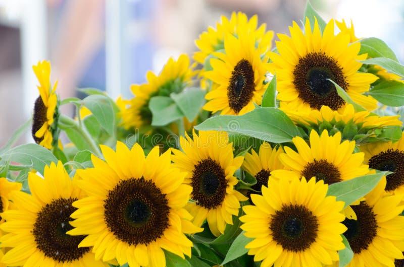 Mercato augusto del fiore del centro città di Redmond immagini stock libere da diritti