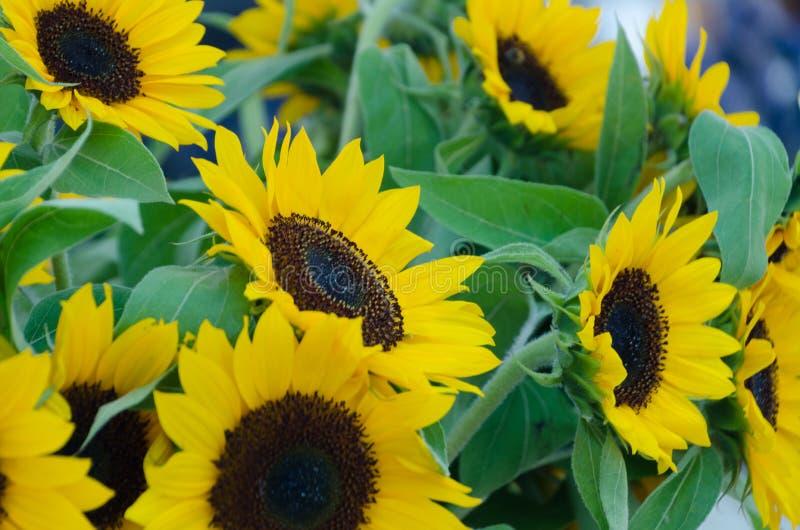 Mercato augusto del fiore del centro città di Redmond immagini stock