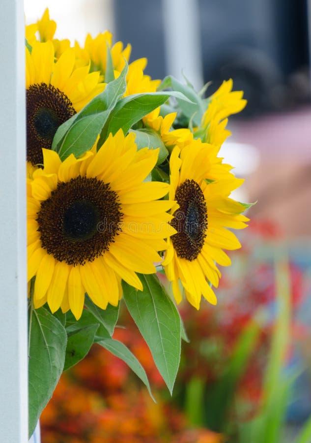 Mercato augusto del fiore del centro città di Redmond immagine stock libera da diritti
