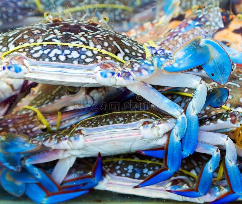 Mercato blu del granchio dell'artiglio immagini stock libere da diritti
