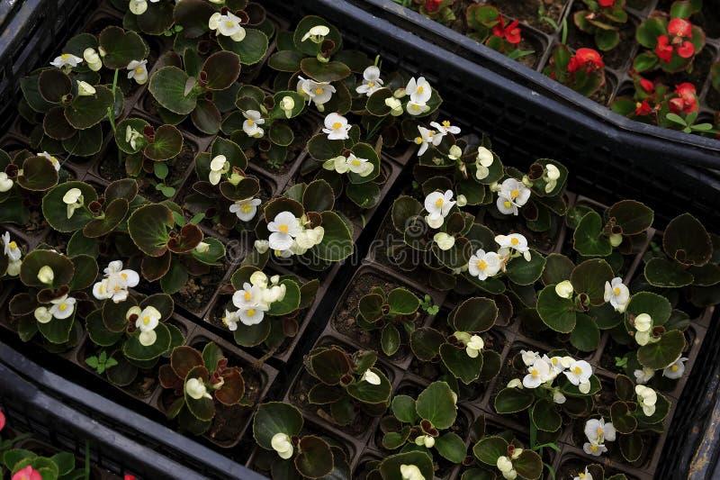 Download Mercato del fiore immagine stock. Immagine di negozio - 30826413