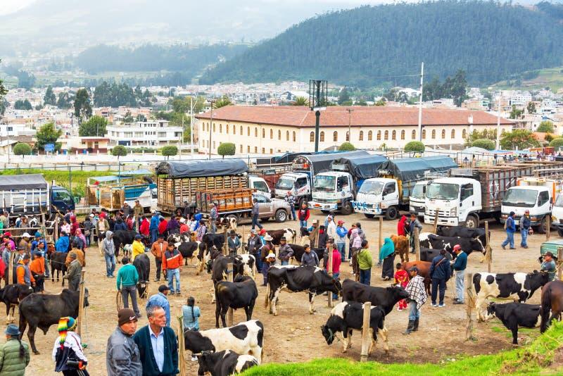 Mercato dell'animale di Otavalo fotografia stock libera da diritti