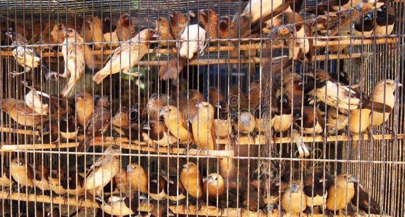 Mercato dell'animale domestico immagini stock libere da diritti