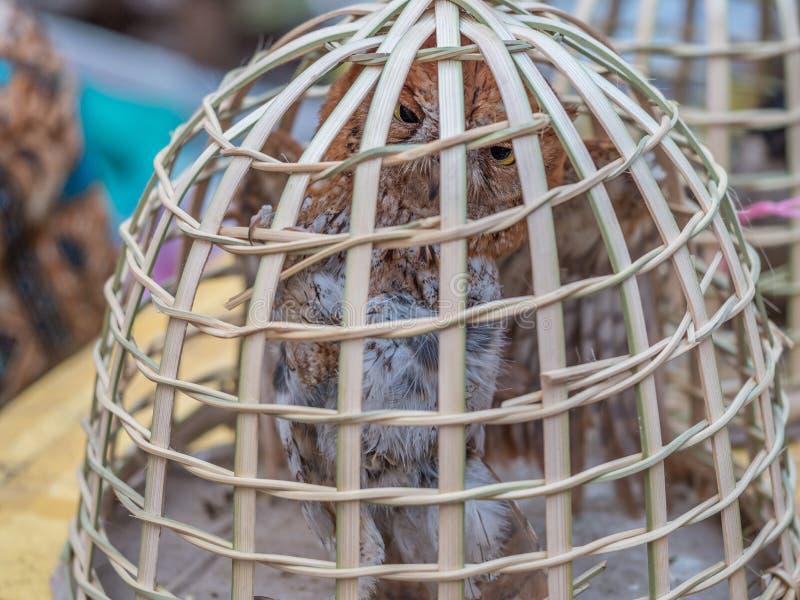Mercato di primo mattino in Luang Phabang Commercio illegale della fauna selvatica nel Laos fotografia stock libera da diritti