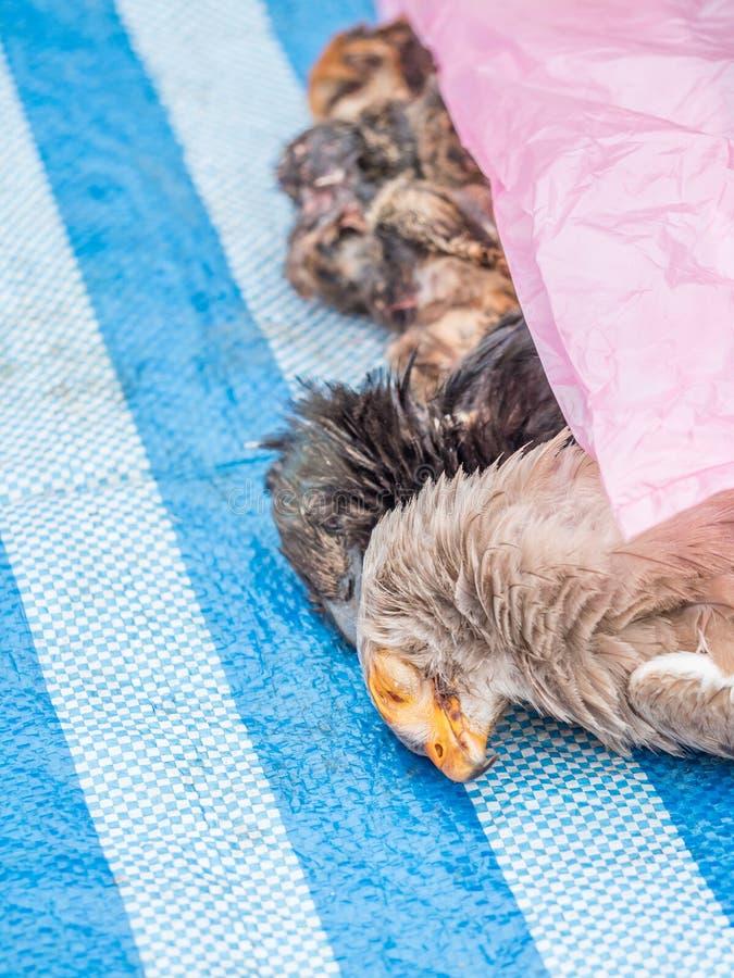 Mercato di primo mattino in Luang Phabang Commercio illegale della fauna selvatica nel Laos fotografie stock libere da diritti