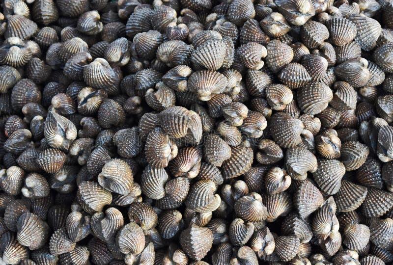 Mercato di prodotti freschi crudo del ristorante dei frutti di mare di vendita del pescatore dei cuori edule grande di mattina fotografie stock