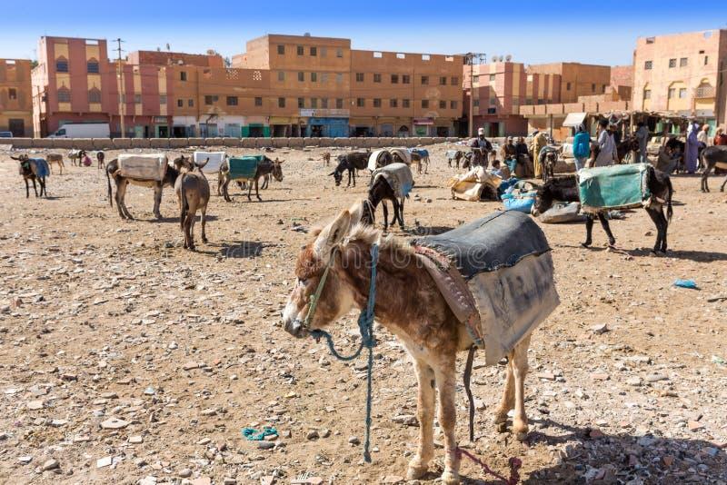 Mercato di Rissani nel Marocco ed il parcheggio degli asini e dei muli immagine stock