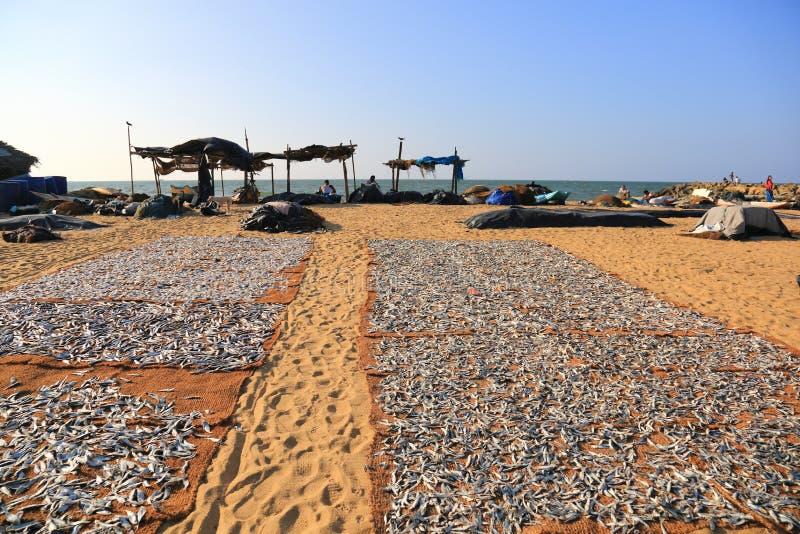 Mercato ittico di Negombo fotografia stock libera da diritti