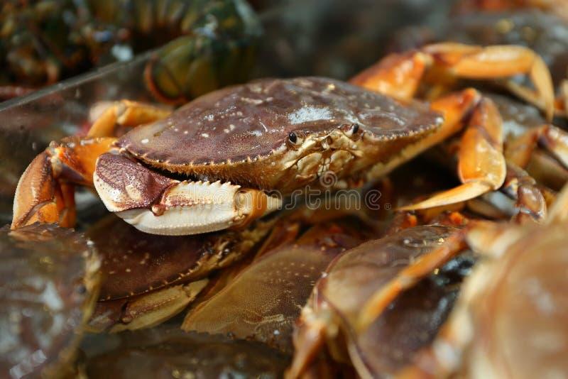 Mercato Live Dungeness Crabs dei frutti di mare immagine stock