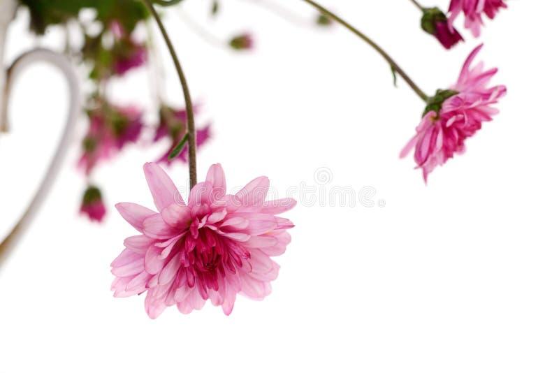 Merce nel carrello dei fiori del crisantemo fotografie stock libere da diritti