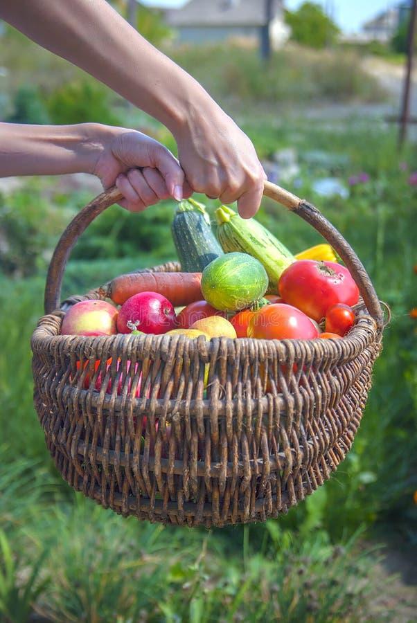 Merce nel carrello della verdura fresca immagine stock libera da diritti