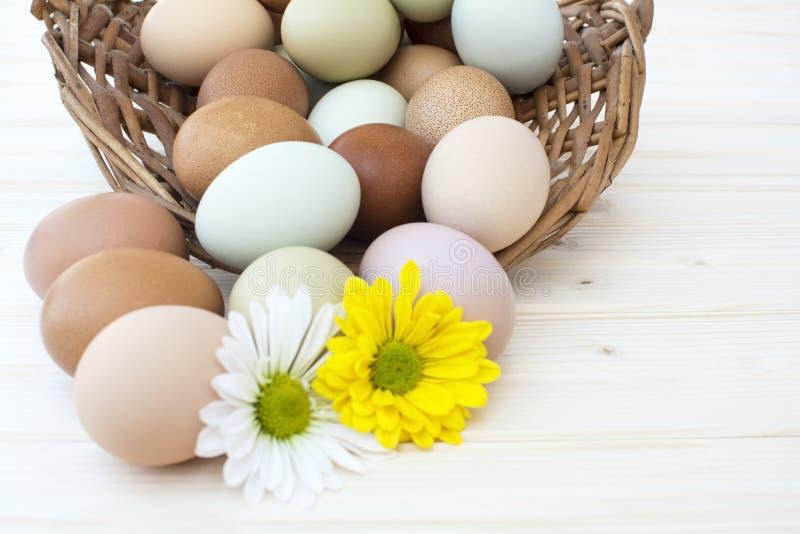 Merce nel carrello delle uova di Pasqua con il fondo del fiore del crisantemo immagine stock libera da diritti