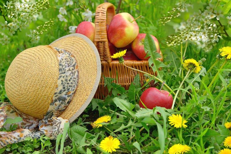Merce nel carrello fresca e variopinta delle mele fotografie stock libere da diritti
