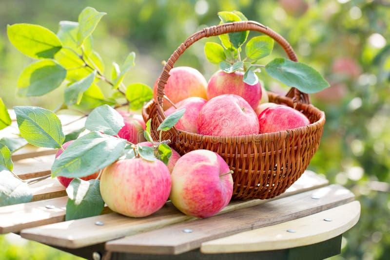 Merce nel carrello organica delle pere e delle mele su una tavola di legno, all'aperto fotografie stock libere da diritti