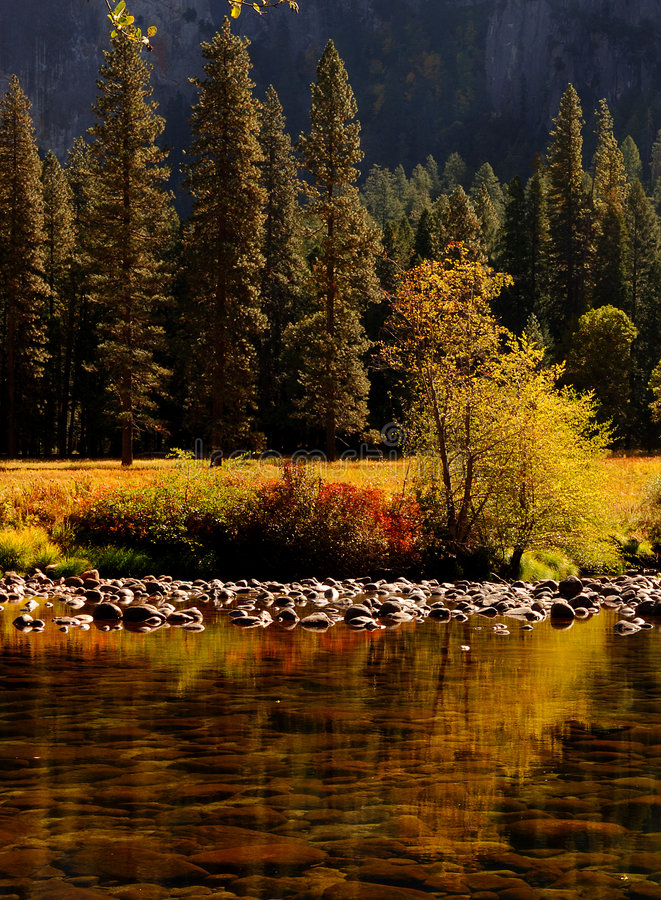 Download Merced River 4 stock photo. Image of pond, yellow, trees - 1467672