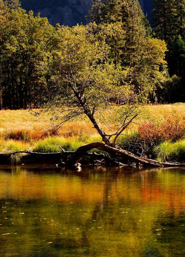 Merced River 9 royalty free stock photo