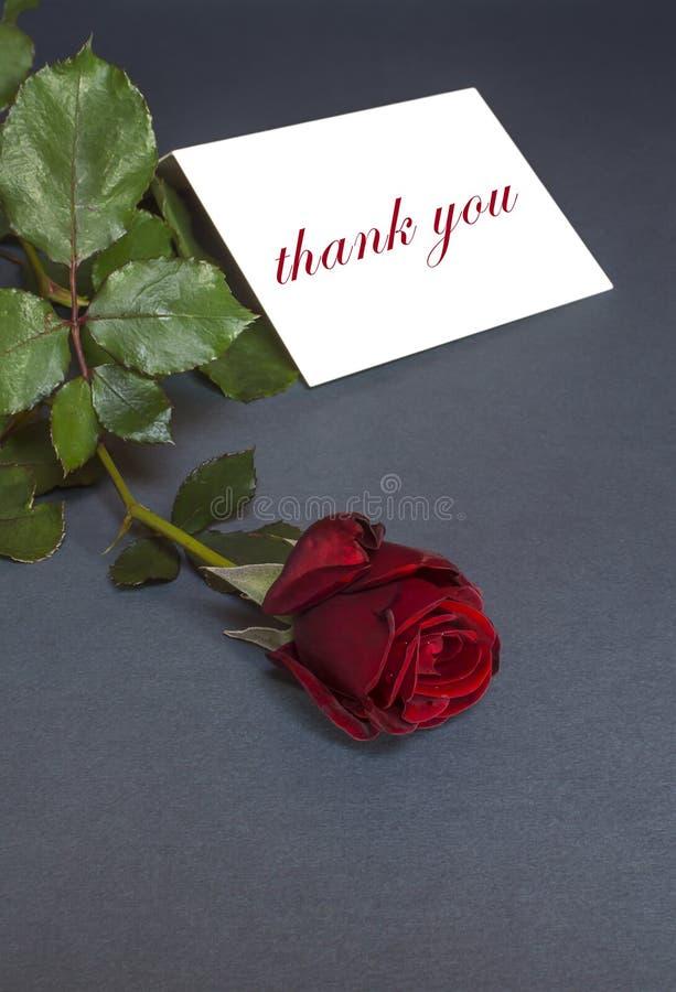 Download Merci Carder Avec La Rose De Rouge Merci Textoter Image stock - Image du anniversaire, vous: 56483669