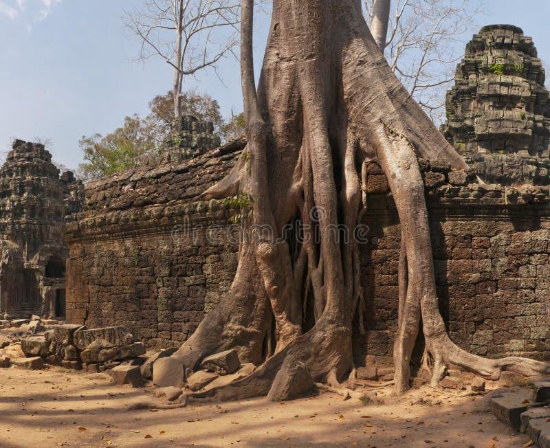 Merci Prohm, temple chez Angkor, Cambodge photographie stock
