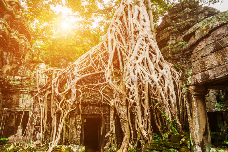 Merci temple de Prohm dans Angkor, Siem Reap, Cambodge photo libre de droits
