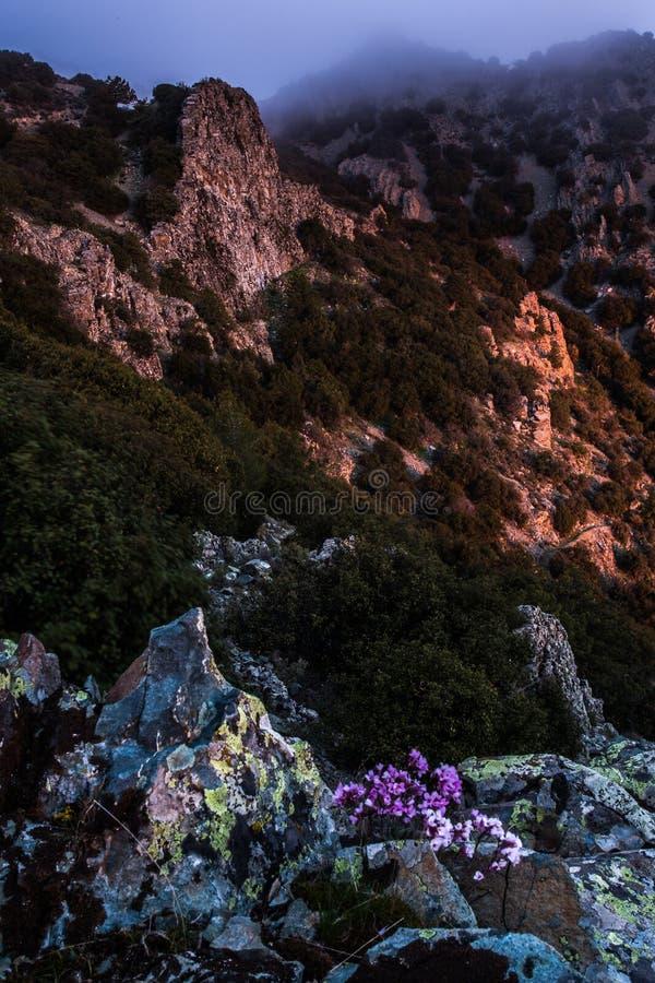 Merci tis Madaris de Teisia au lever de soleil, Chypre photos stock