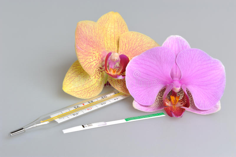 Mercury thermometer, ovulation test with two orchid flowers on gray. Mercury thermometer and ovulation test with two orchid flowers on gray royalty free stock photography