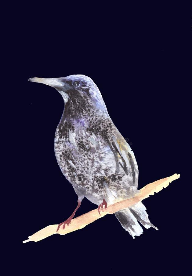 Merel op een tak Ousel het schilderen Waterverfillustratie van lijster Mooie Gestileerde Vogel Ring Ouzel op dark wordt geïsoleer vector illustratie