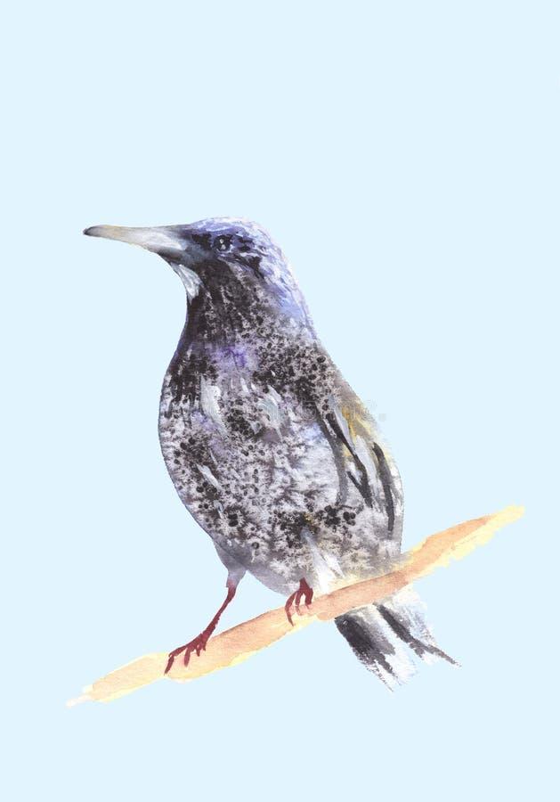 Merel op een tak Ousel het schilderen Waterverfillustratie van lijster Mooie Gestileerde Vogel Ring Ouzel op licht wordt geïsolee vector illustratie
