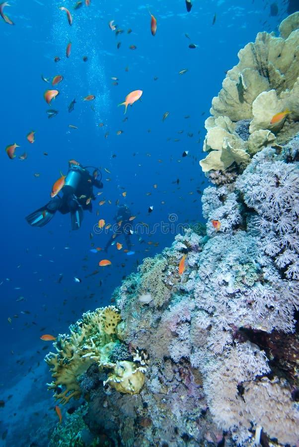 Mergulhador ao lado de um recife coral tropical imagens de stock royalty free