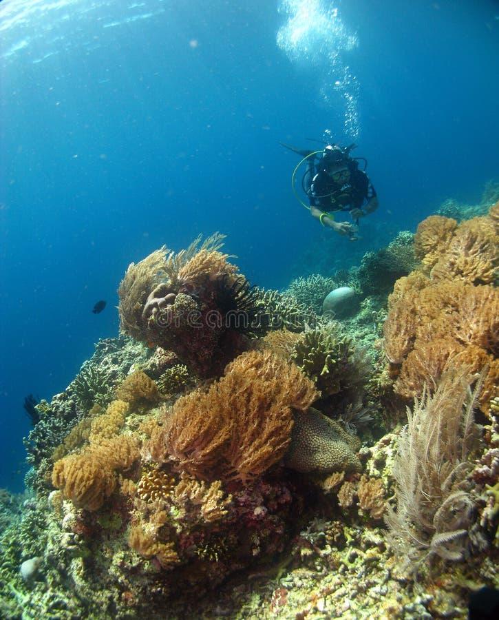Mergulhador com corais bonitos imagem de stock