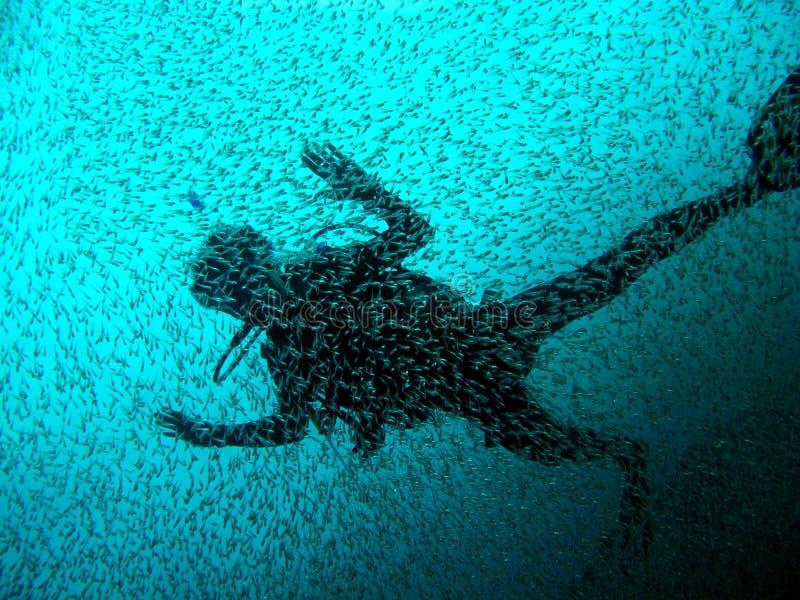 Mergulhador com a escola dos peixes imagem de stock royalty free
