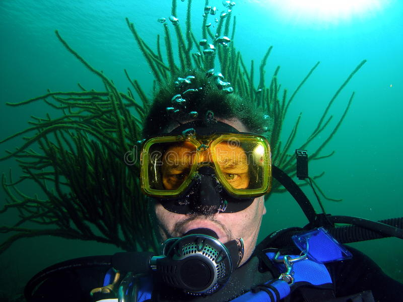 Mergulhador com hairdo foto de stock royalty free