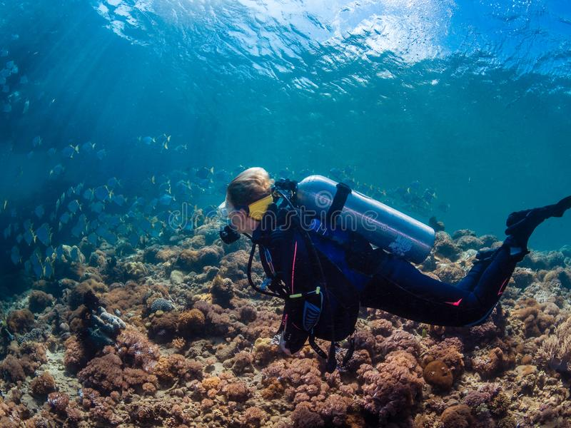 Mergulhador da senhora com a escola dos diamondfish foto de stock