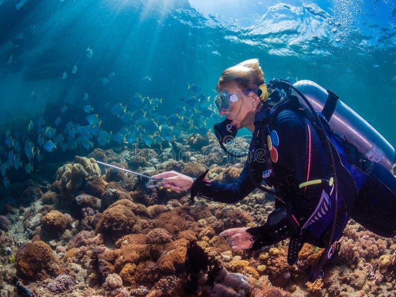 Mergulhador da senhora com a escola dos diamondfish foto de stock royalty free