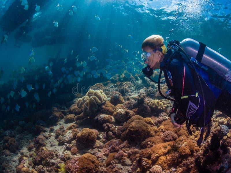 Mergulhador da senhora com a escola dos diamondfish fotografia de stock royalty free