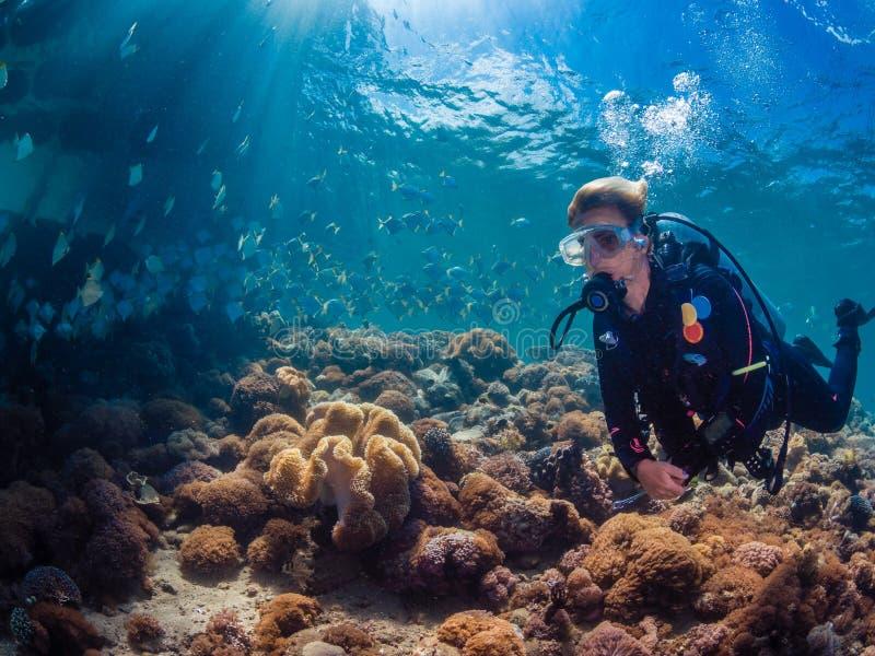 Mergulhador da senhora com a escola dos diamondfish fotografia de stock