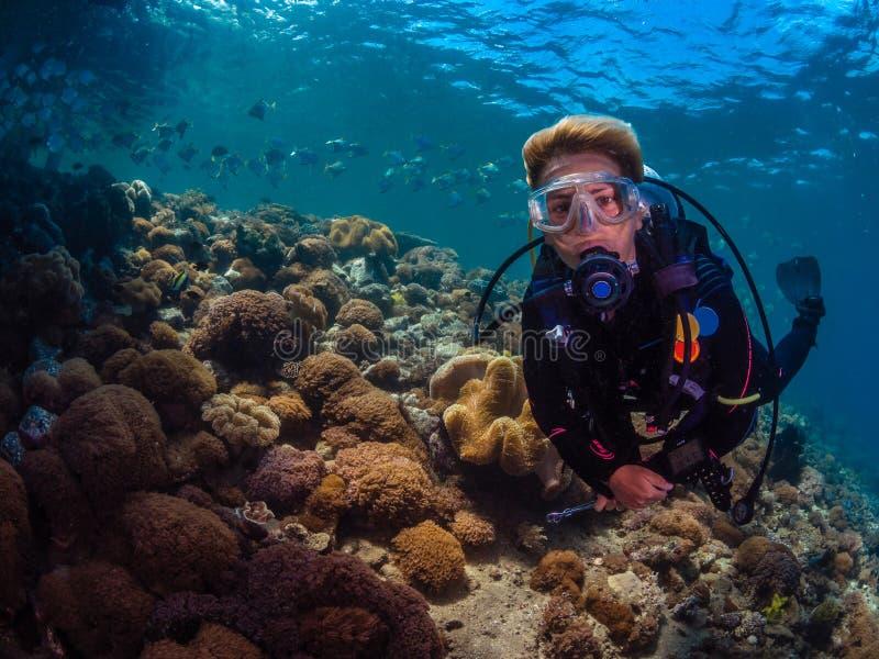 Mergulhador da senhora com a escola dos diamondfish fotos de stock royalty free