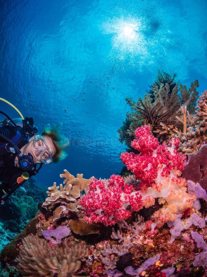 Mergulhador da senhora e recife de corais espetacular imagens de stock