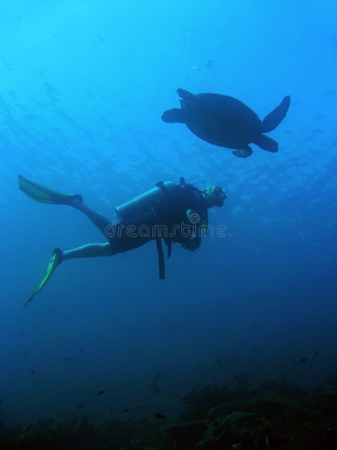 Mergulhador da tartaruga imagens de stock