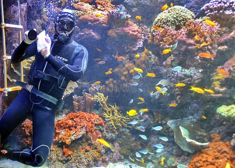 Mergulhador de mergulhador imagens de stock