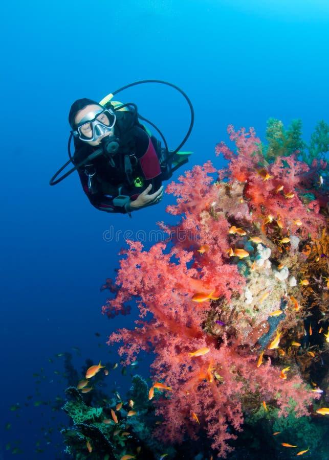 Mergulhador de mergulhador de Feamle e recife coral colorido imagem de stock