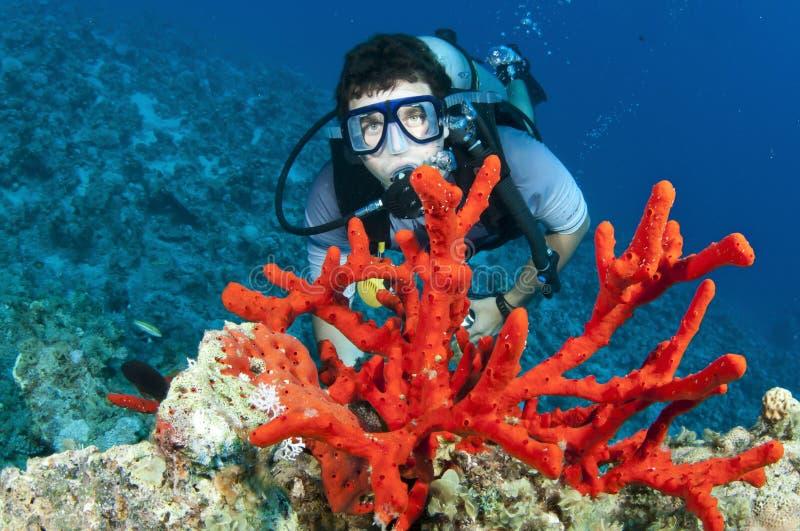 Mergulhador de mergulhador do homem e coral vermelho fotografia de stock royalty free