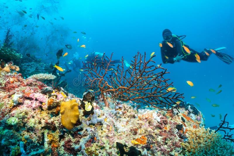 Mergulhador de mergulhador no Oceano Índico fotografia de stock royalty free